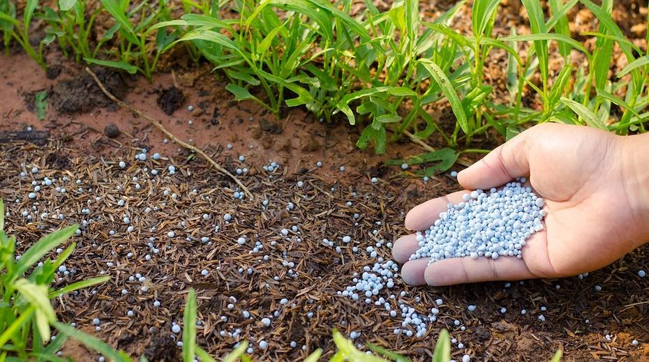 Минеральные удобрения: состав, виды, как правильно вносить